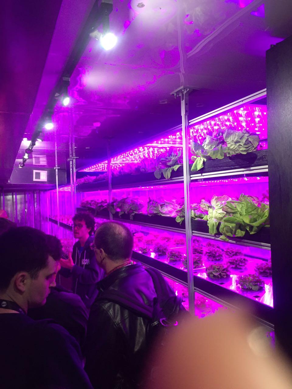 truck de verduras hidroponicas